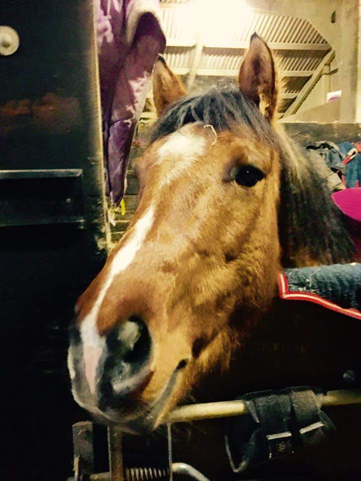 Meet The Horses Tumpy Green Equestrian